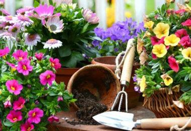 Meilleur Pot De Fleur