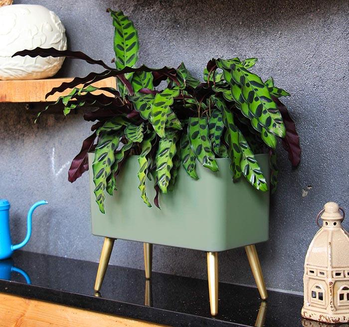 test Sungmor Smart Alarm Jardinière à arrosage automatique