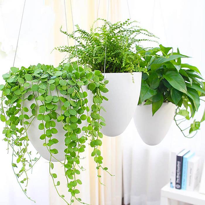 test et avis Sungmor Garden Arrosage automatique Pot de fleurs à suspendre
